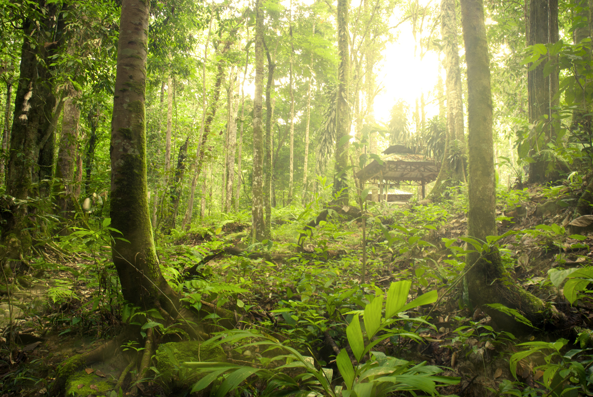 the borneo rainforest Borneo lowland rain forest is an ecoregion, within the tropical and subtropical moist broadleaf forests biome, of the large island of borneo in southeast asia it supports approximately 10,000 plant species, 380 bird species and several mammal species.
